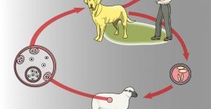 Zoonotik Hastalık Nedir?